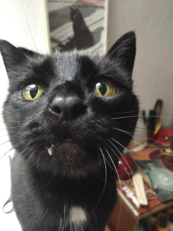 Katzenkatalina auf dem Foto