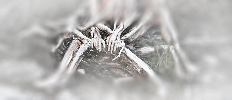 Knochen und Wurzeln